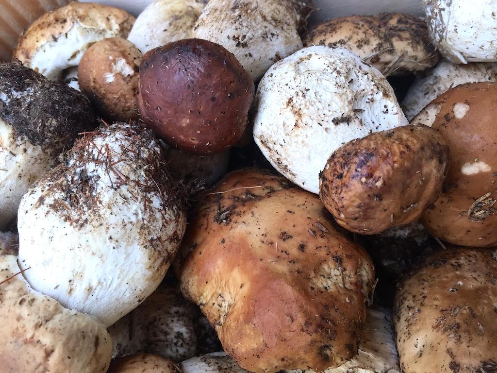 Funghi porcini - Foto Running Post