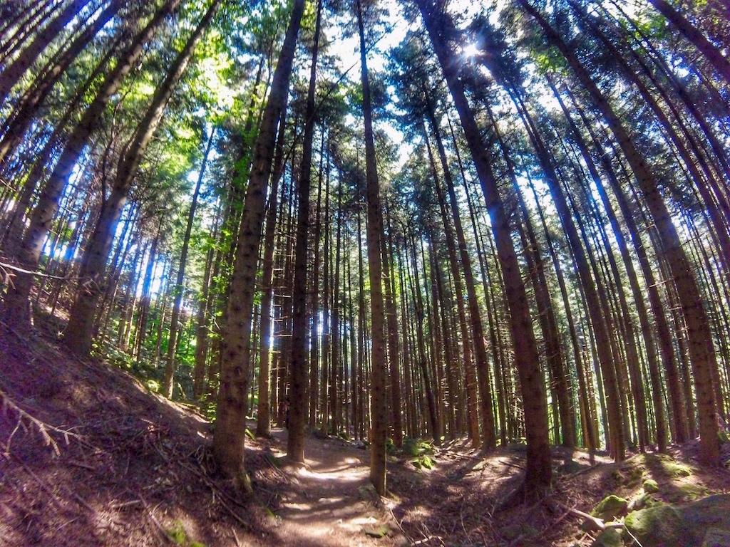 Cima Tauffi Trail 2019 - www.runningpost.it